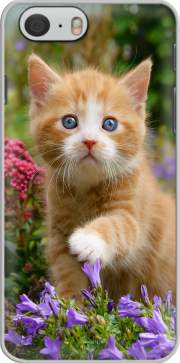 Cute ginger kitten in a flowery garden, lovely and enchanting cat skal för Iphone 6 4.7