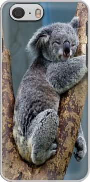 Koala Bear Australia skal för Iphone 6 4.7