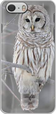skal owl bird on a branch for Iphone 6 4.7