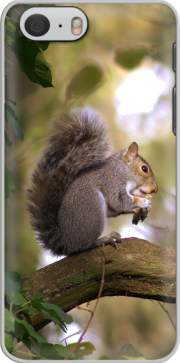 skal squirrel gentle for Iphone 6 4.7