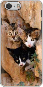 Three cute kittens in a wall hole skal för Iphone 6 4.7