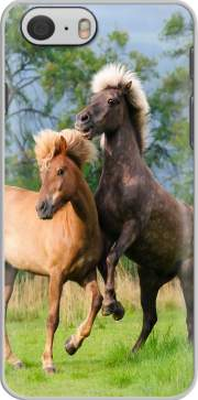 Two Icelandic horses playing, rearing and frolic around in a meadow skal för Iphone 6 4.7